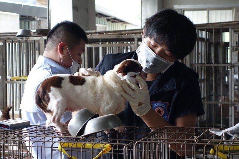 2015年9月,北市動保處在北投山區破獲一家經營逾20年的非法繁殖場,現場查獲349隻犬隻。 圖/北市動保處提供