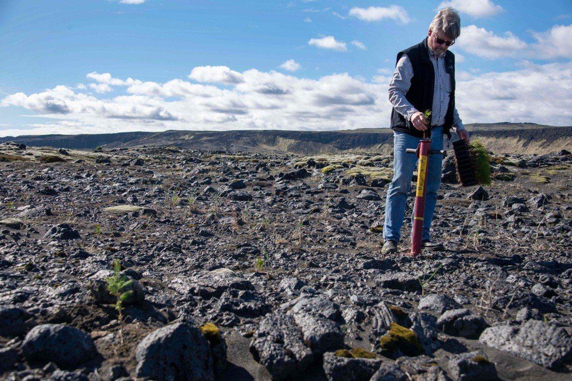過去4年,冰島總共種植了300多萬株樹木,希望緩解氣候暖化、土壤侵蝕及沙漠化危機...