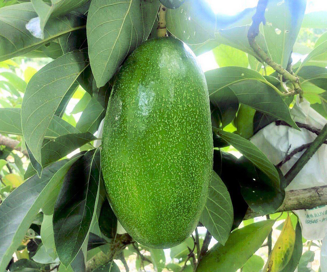 酪梨是單元不飽和脂肪酸的絕佳來源,含有抗發炎抗氧化劑,包括維生素A、C、E,這些...