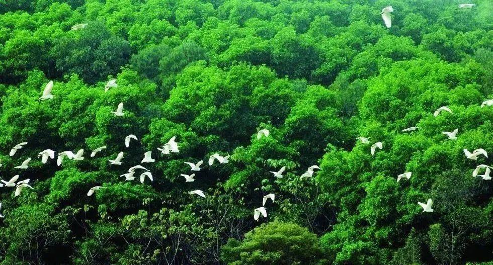 被稱為「小鳥天堂」的景區,多年來形成各種鳥類群聚的自然生態景觀。(中國鐵路)
