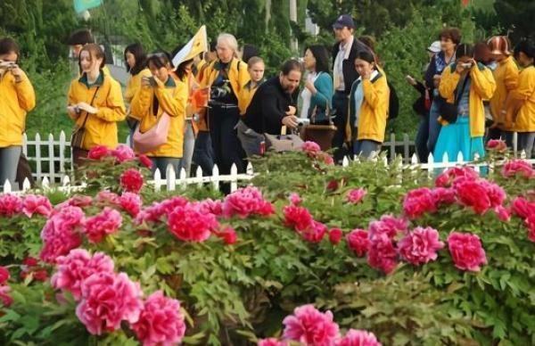 網路上不少人推薦牡丹為國花,但背後牽扯到地方的利益。圖為觀賞牡丹的人群。圖/摘自...