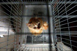 李娉婷/露西法案在台灣(三):寵物產業轉型,台灣準備好了嗎?