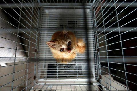 露西法案在台灣(三):寵物產業轉型,台灣準備好了嗎?