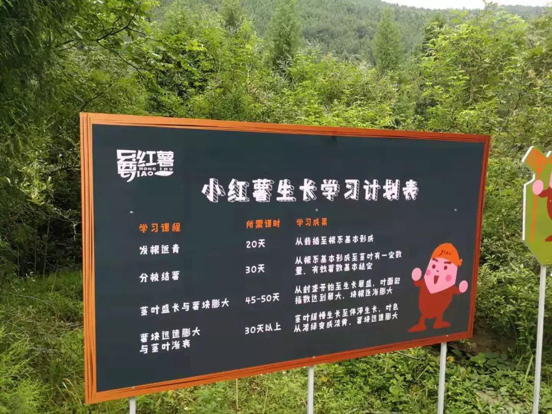 台灣青年許淵順發起文創農業「嘦紅薯」計劃,為村子帶來人氣。(華夏經緯網)