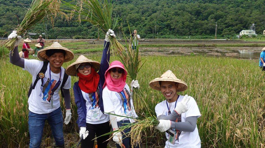 中興大學來自尼加拉瓜、泰國、印尼、越南及本地學生組國際隊伍,在鯉魚社區駐村,與當地居民攜手生態調查,也一起下田體驗割稻。記者劉星君/攝影