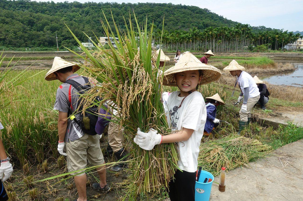 參割稻的小朋友開心的抱起割稻成果。記者劉星君/攝影