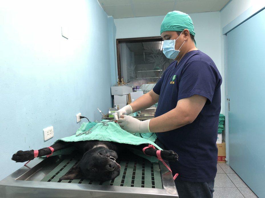 花蓮今年度免費犬貓絕育活動,即起受理申請。圖/縣府提供