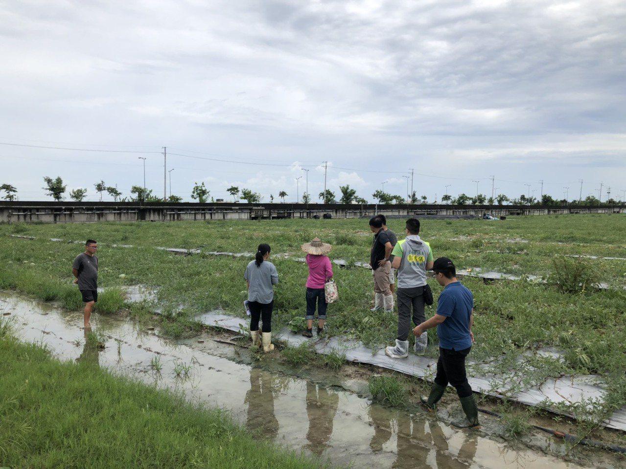 近日降雨頻頻釀災, 台南仁德歸仁部分瓜果受損逾2成達現金救助標準。圖/農業局提供