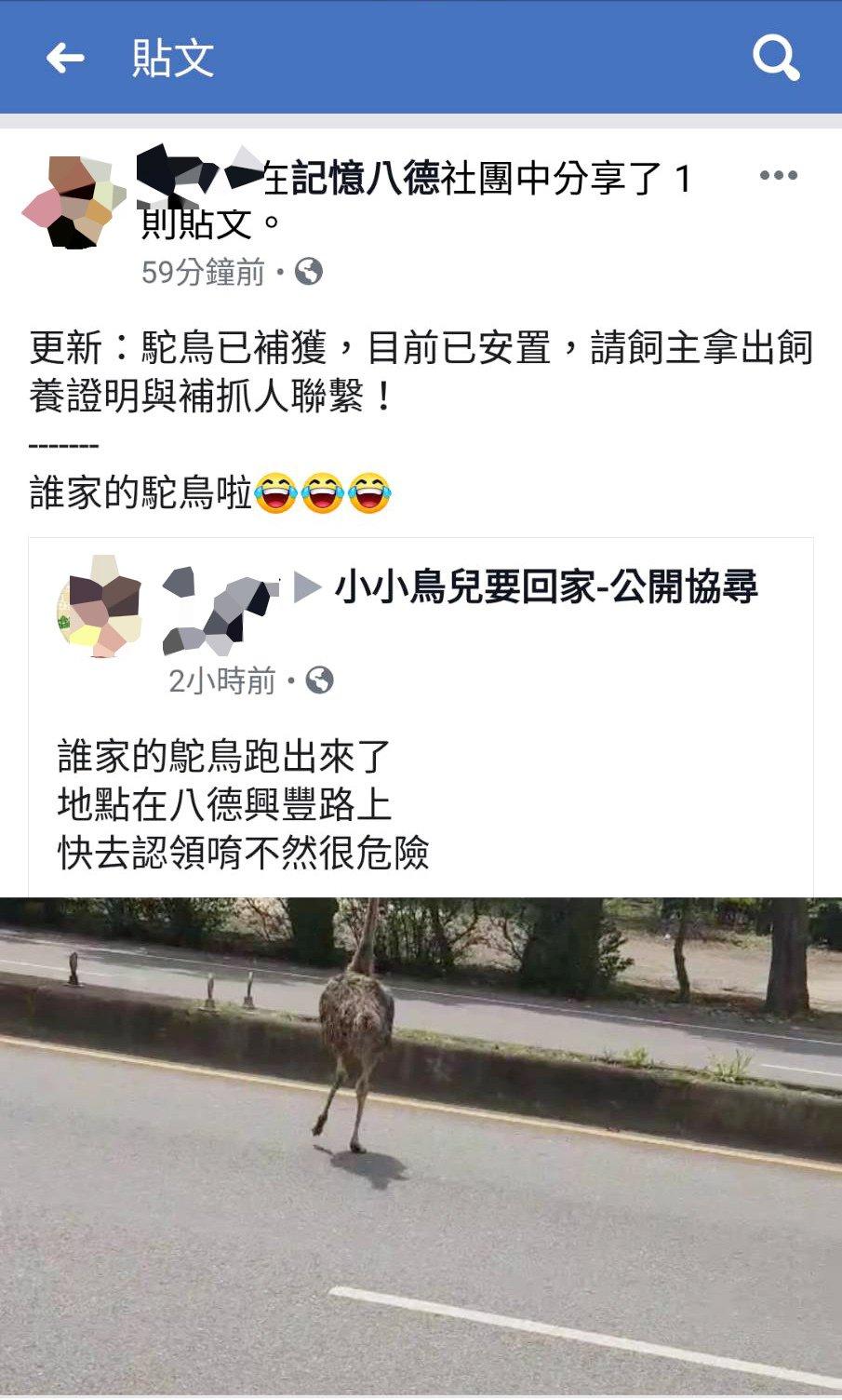 桃園市八德落跑的鴕鳥在興豐路上一路狂奔,車輛紛紛避開,網友在臉書「記憶八德」社群...