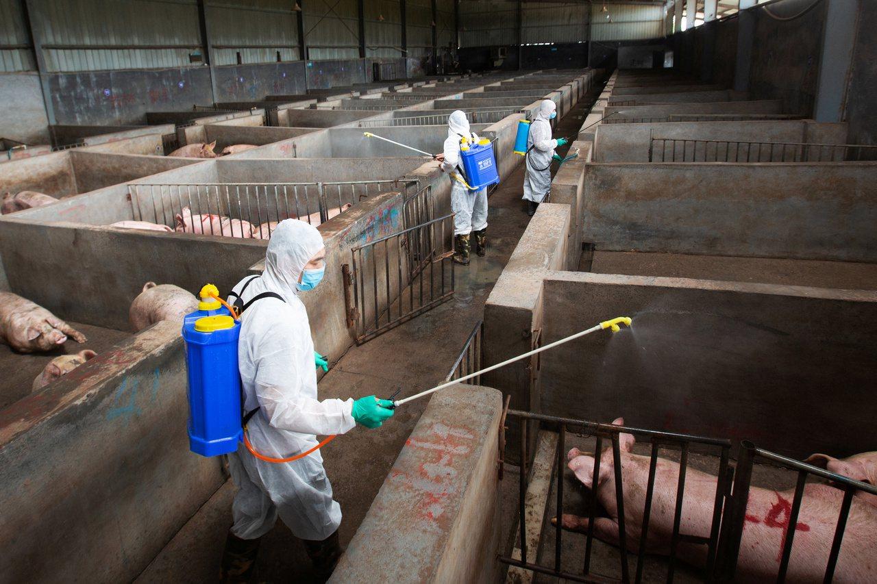 受非洲豬瘟影響 中國豬價飆漲進口豬肉劇增 未來半年情況可能更糟 (路透)