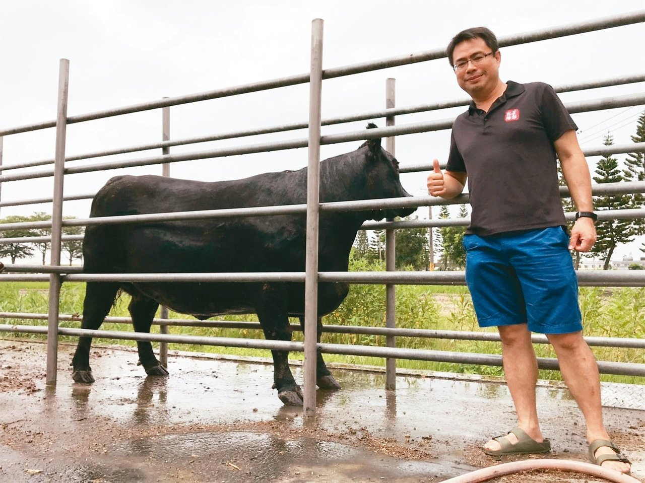 芸彰牧場場長張志名說,溫帶的牛適應了台灣亞熱帶的氣候,存活率提升,未來才有機會擴...