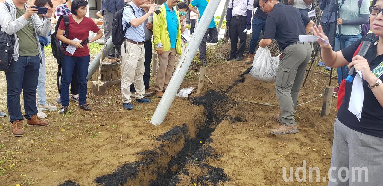 農委會林業試驗所將大樹的根部掘開後,倒入黑色的生物碳,有助通氣、排水。記者修瑞瑩...