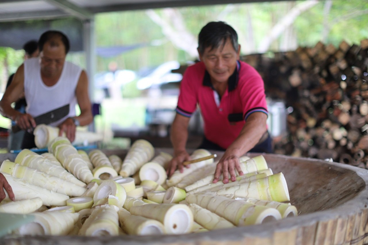 7月正值雲林古坑鄉麻竹筍盛產期。記者李京昇/攝影