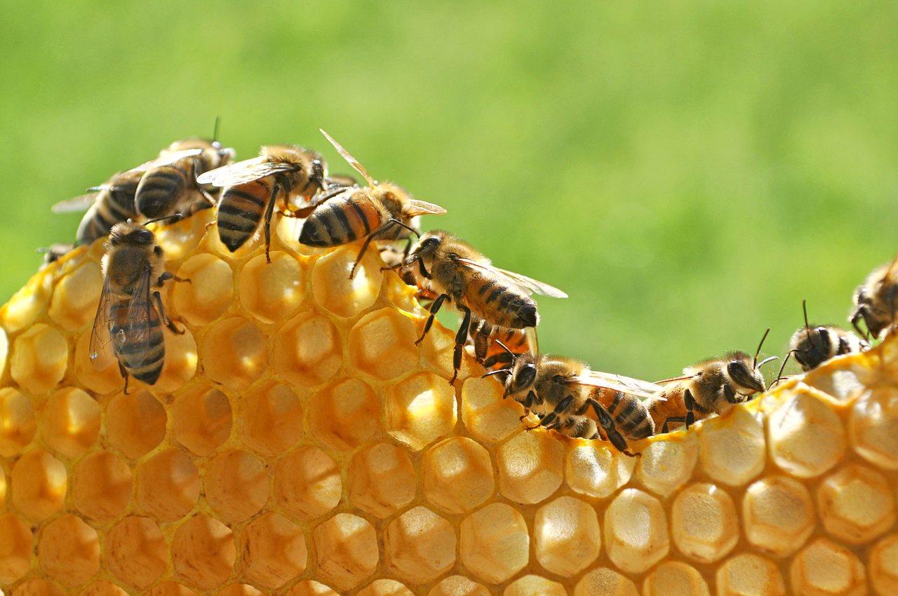 俄羅斯出現蜂群大量死亡事件,將影響當地作物與蜂蜜產量及價格,官員指出是農藥不當使...
