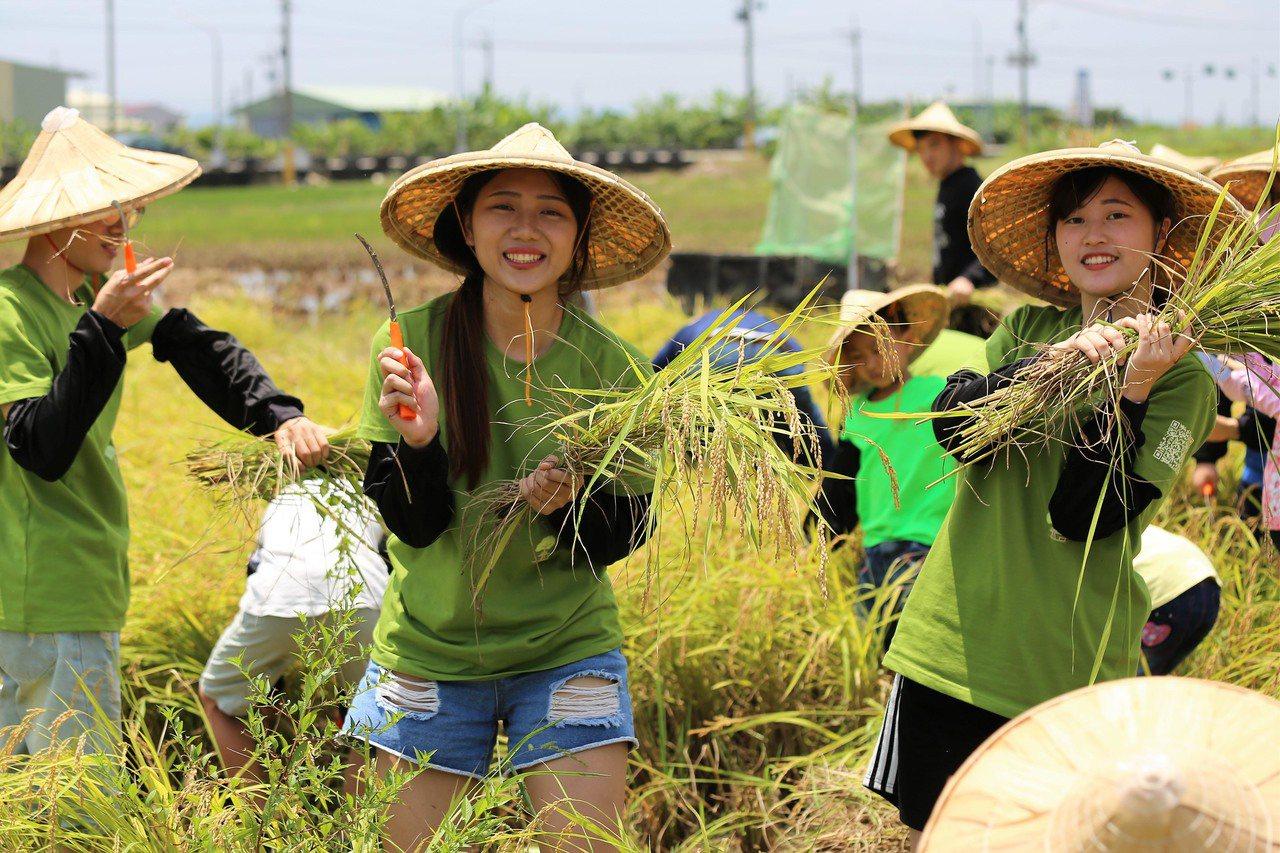 南臺科大團隊與在地社區結合共推農事體驗,年輕學生體驗收成。圖/南臺科大團隊提供