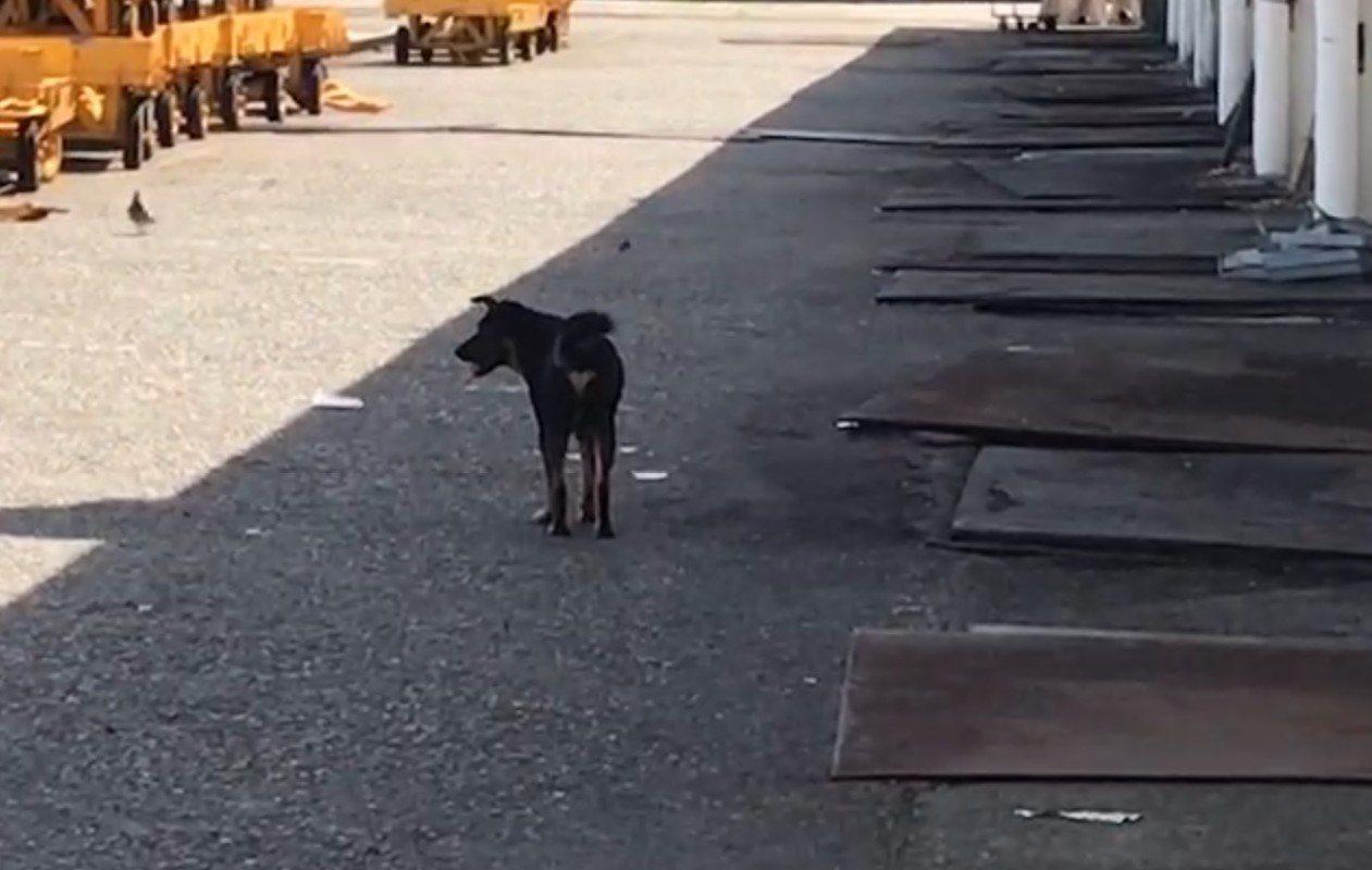 一名流浪動物愛心媽媽在臉書上指控,台船基隆廠區6、70隻流浪狗恐餓死,台船澄清非...
