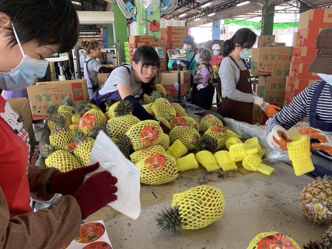鳳梨是高雄市主要外銷果品。圖/高雄市農業局提供