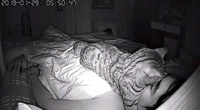 貓咪壓住胸口和臉,害飼主睡不好。圖取自twitter