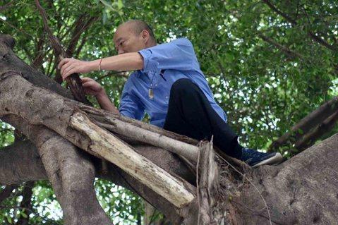 韓國瑜爬樹看到樹洞後,更應該做什麼?