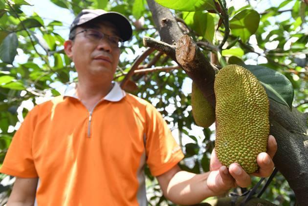 順應氣候變遷,屏東農民引進原產於東南亞國家的榴槤蜜等熱帶水果栽種,開啟新商機。 ...