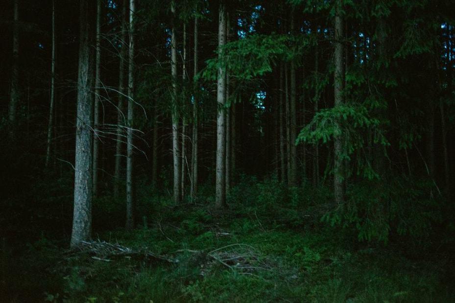 荷蘭烏特勒支市附近的森林,最近有童軍團體把小孩「放生」在這裡。圖/取自紐約時報