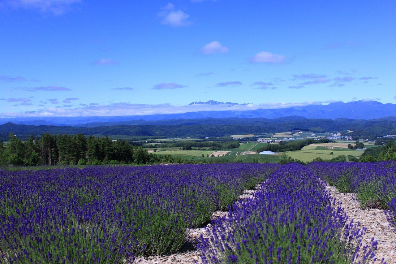 北海道「麓鄉觀景台」的最佳觀賞期為7月中旬至7月下旬。圖/樂天旅遊提供
