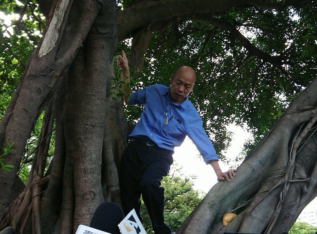 62歲的韓國瑜俐落爬上3公尺高大樹查看樹洞,還轉身向下方的官員及媒體報告情況。圖...