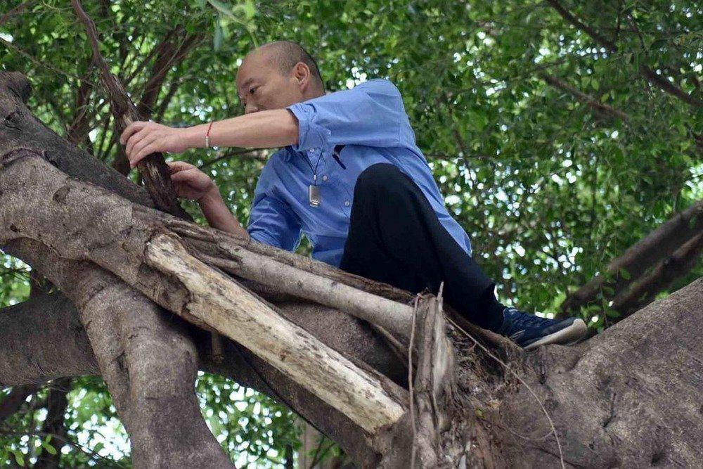高雄市長韓國瑜因爬上樹觀察樹洞,引發熱議。 圖/高雄市新聞局提供