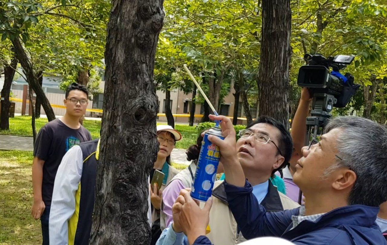 台南市長黃偉哲昨天到巴克禮公園視察登革熱防疫工作,防疫人員利用發泡劑填充樹洞。 ...
