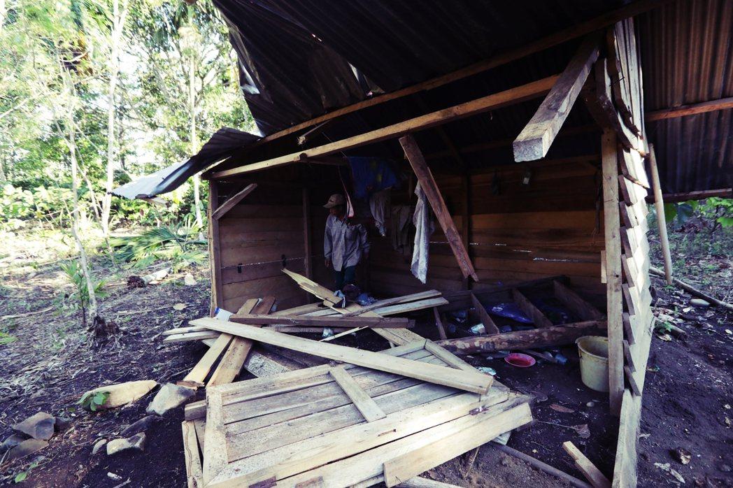 象群衝撞與踩踏村落,造成住屋與農田嚴重破壞,在蘇門答臘越來越頻繁。圖為今年2月,...