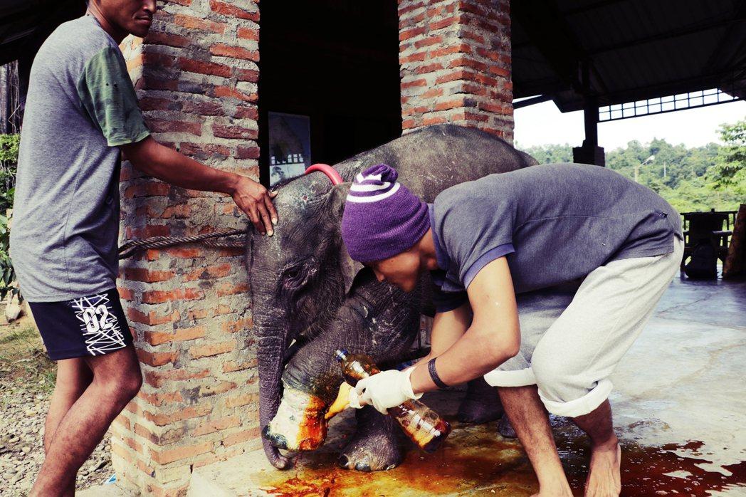 目前小象已由亞齊的CRU接手,進行後續治療與野放安排,但人與象之間的對立卻始終未...