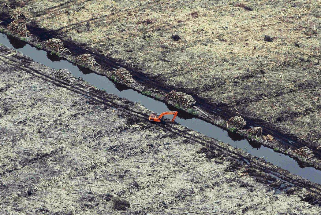 過去25年蘇門答臘就有3分之2的原始雨林,慘遭夷為平地。被砍伐的林地,大部分被開...