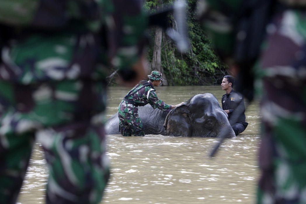 馴象在印尼及諸多東南亞國家歷史悠久。圖為在印尼亞齊森林中,印尼軍警、森林保育員與...