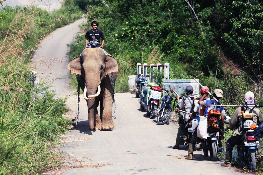 「保育大象、減少人象衝突」為初衷,立意良善的計畫,卻並不總是帶來美好結果。比如今...