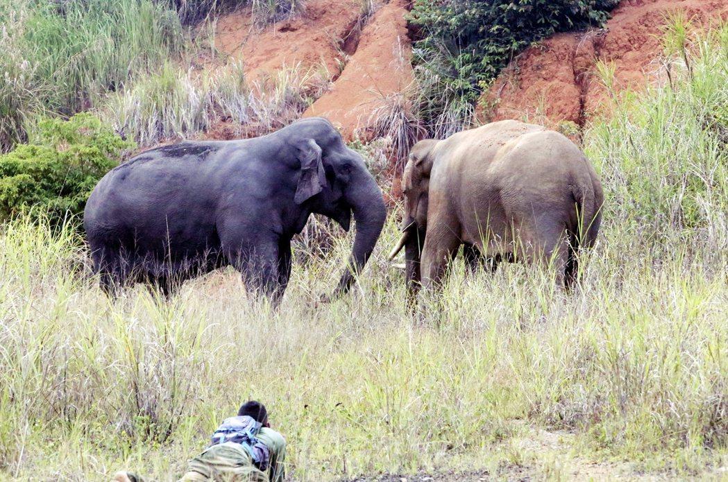 但在近年急遽惡化的印尼「人象衝突」,究竟有多嚴重?這些受人飼養、訓練的大象趕象隊...