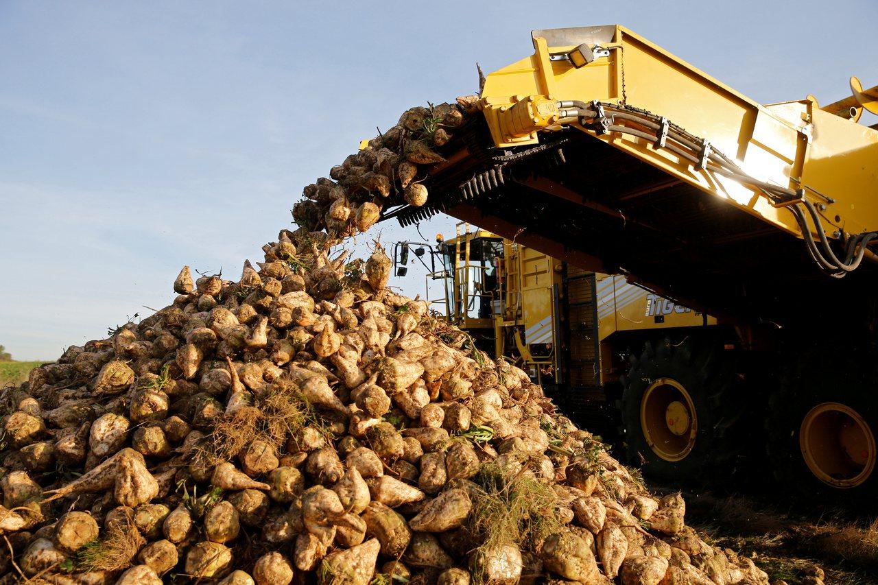 英國每年有超過10億英鎊的農產品遭丟棄或拿來做飼料。路透
