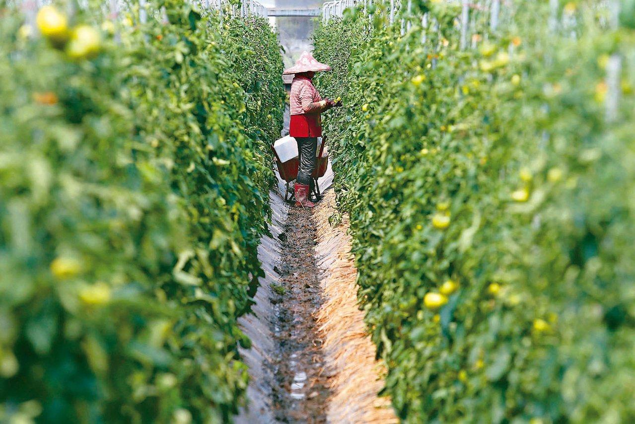 出售農地之前,所有權人最好先向公所申請「農業用地作農業使用證明書」。圖/聯合報系...