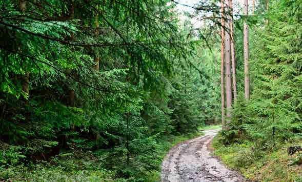 圖/摘自《森林癒:你的生活也有芬多精,樹木如何為你創造健康和快樂》