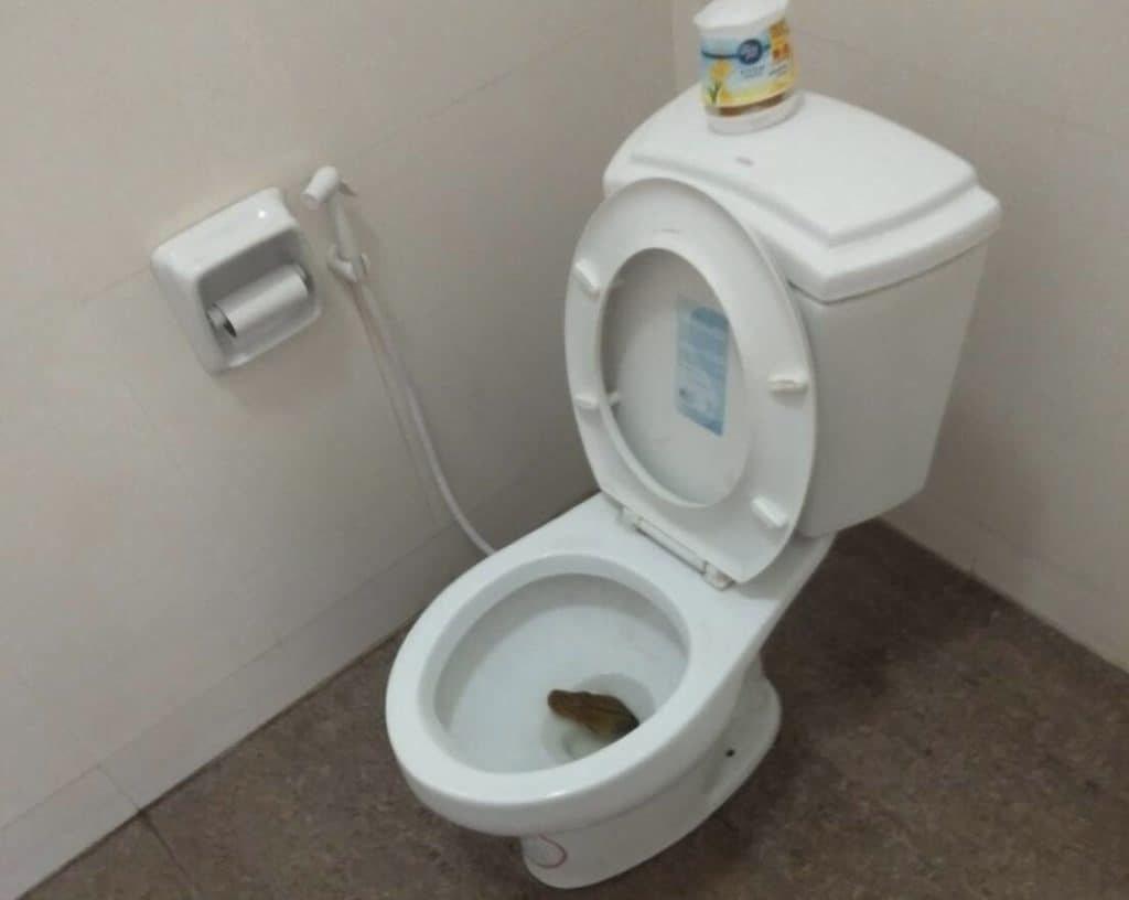 銀行行員正要上廁所時,在馬桶中發現有一條蛇。 圖擷自ข่าวชาวบ้าน - ...