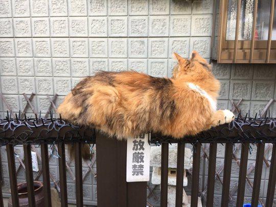 防貓刺墊似乎無用? 圖片來源/日2ch論壇