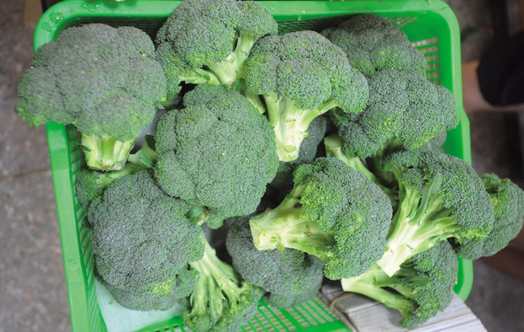 青花椰菜堪稱「超級蔬菜」。 聯合報系資料照 圖/陳易辰