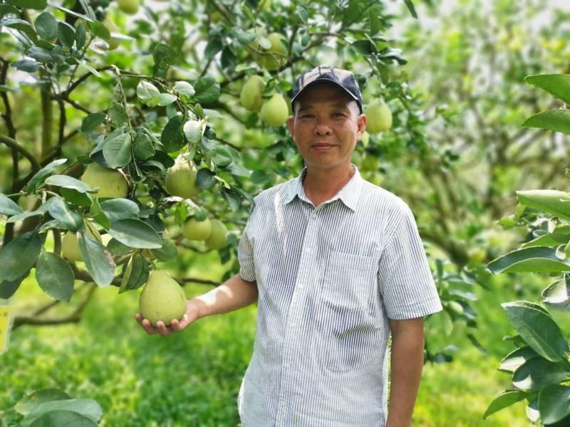 曾拿下兩屆文旦大獎的台南市麻豆柚農林建良,榮獲農委會產銷履歷達人殊榮。圖/台南市政府農業局提供