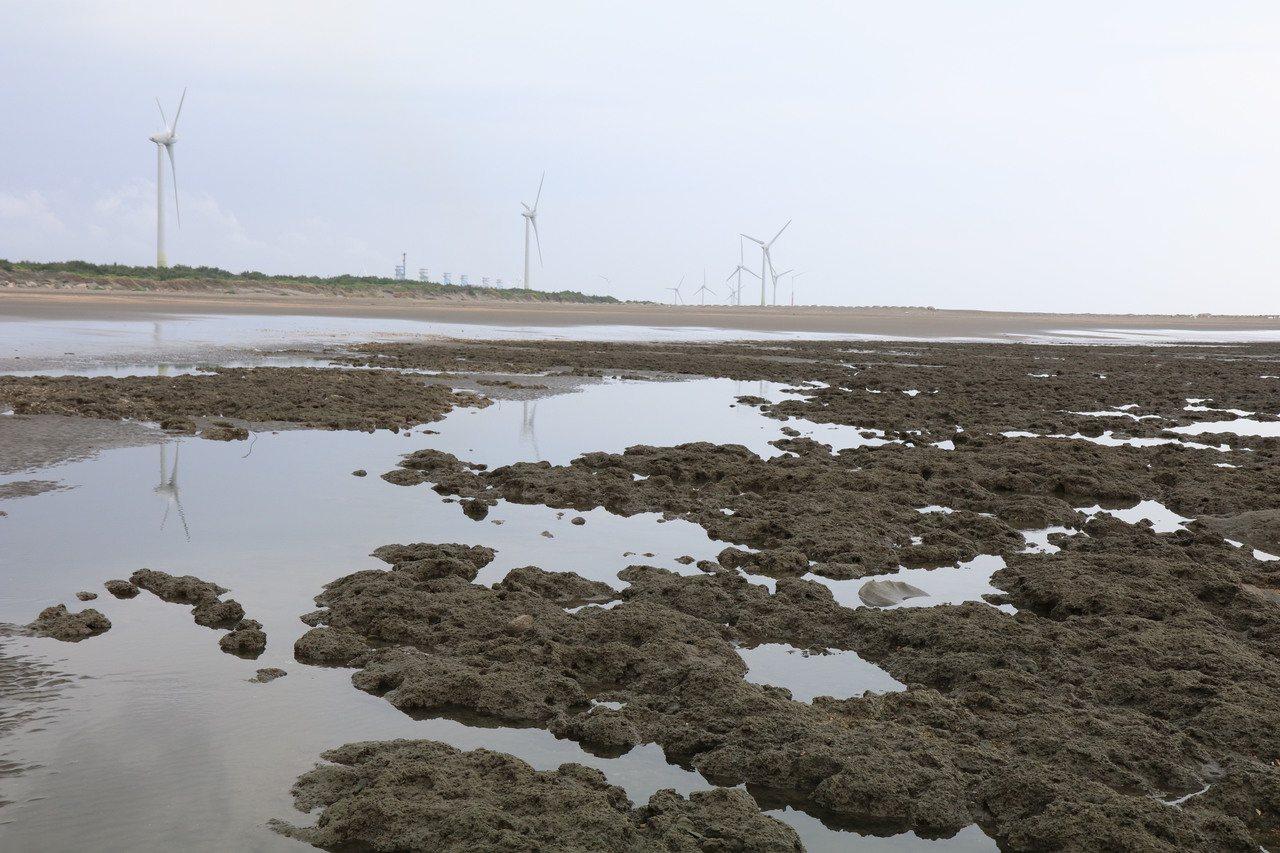 行政院環保署通過觀塘環評案,環保團體擔憂大潭藻礁生態保育遭危及,桃園海岸生態保育...