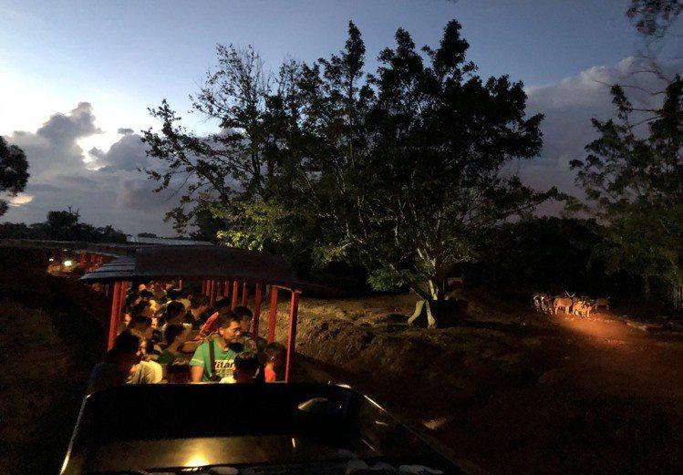 傍晚搭上蒸氣火車探訪夜間動物園。圖/六福村提供