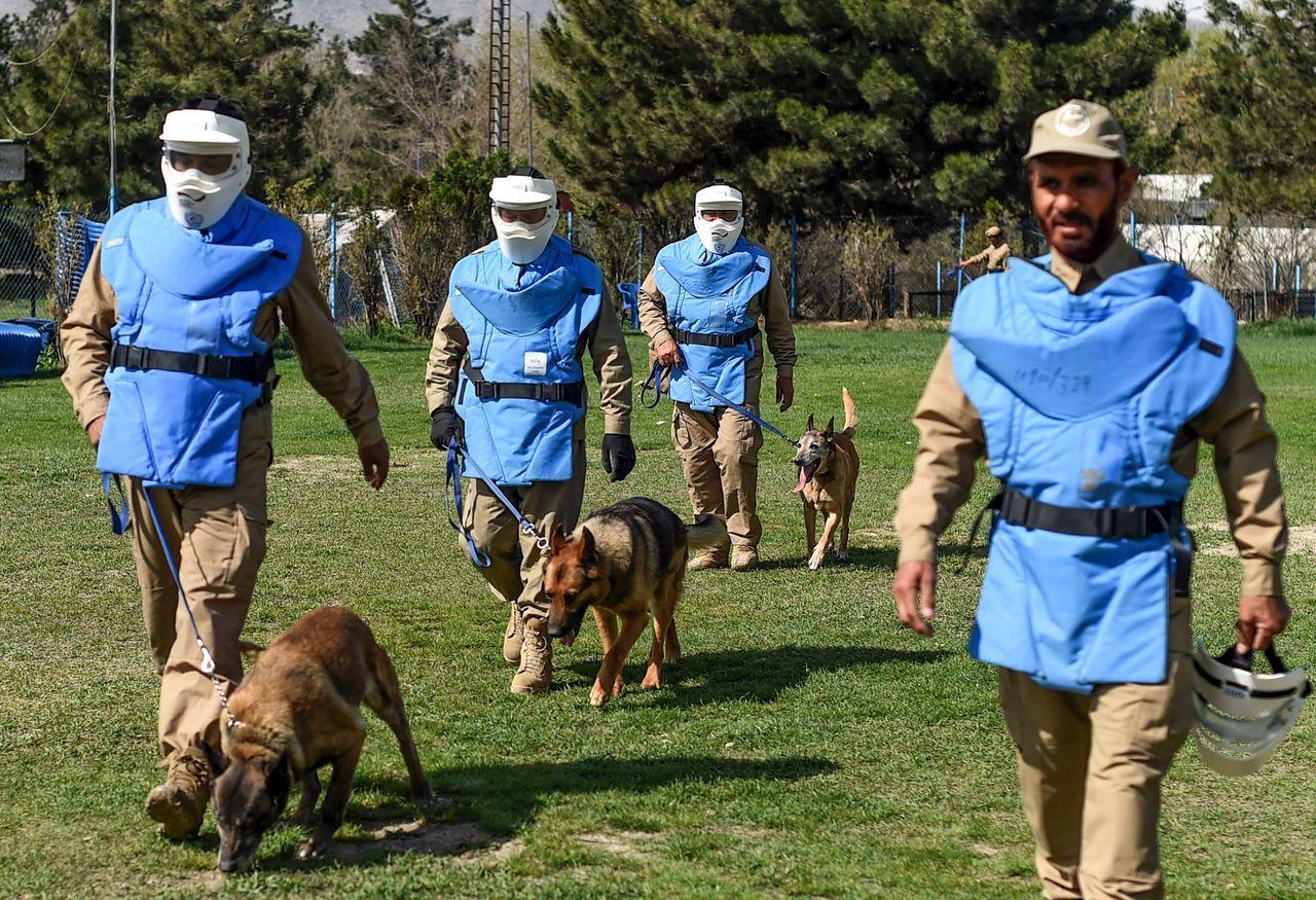 訓犬師和掃雷犬必須完美配合,因為一旦失誤就有可能造成傷亡。 (法新社)