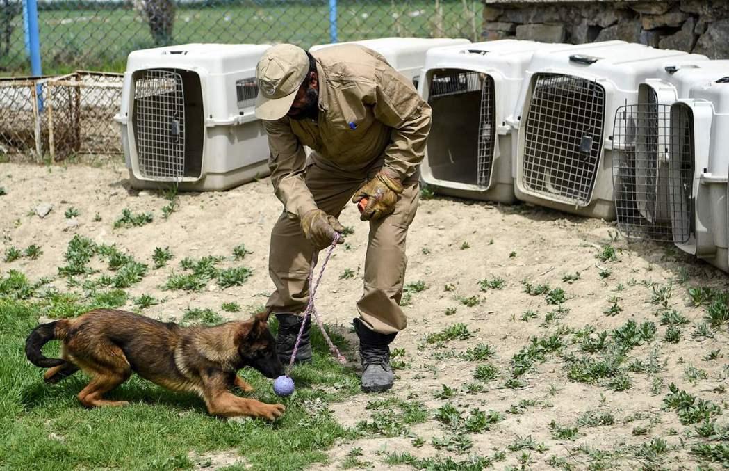 掃雷犬必須學會辨認各種氣味,以便在任務中辨識地雷或藥物。 (法新社)