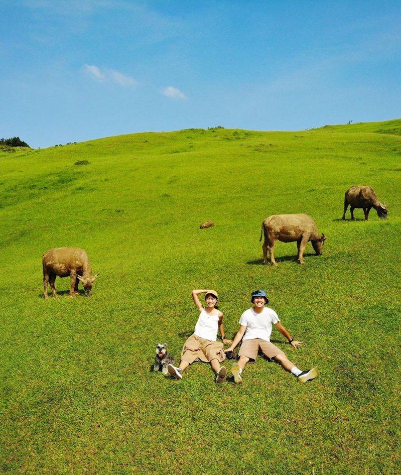 圖/只要約20分就能登頂,漫步桃源谷大草原,還有可愛牛群相作伴。網友arielhu218授權