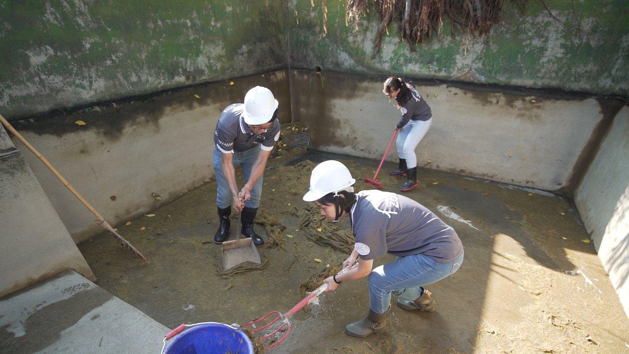 新竹市立動物園利用河馬樂樂的糞便製作河馬便便紙。圖/新竹市府提供