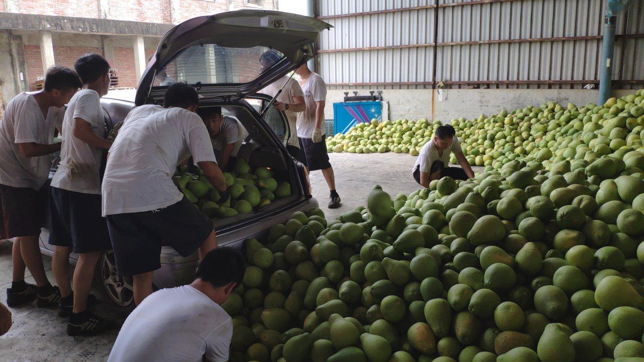 麻豆農會啟動收購文旦次級品,可望有效去化每年文旦產期面臨的產銷問題。記者謝進盛/...