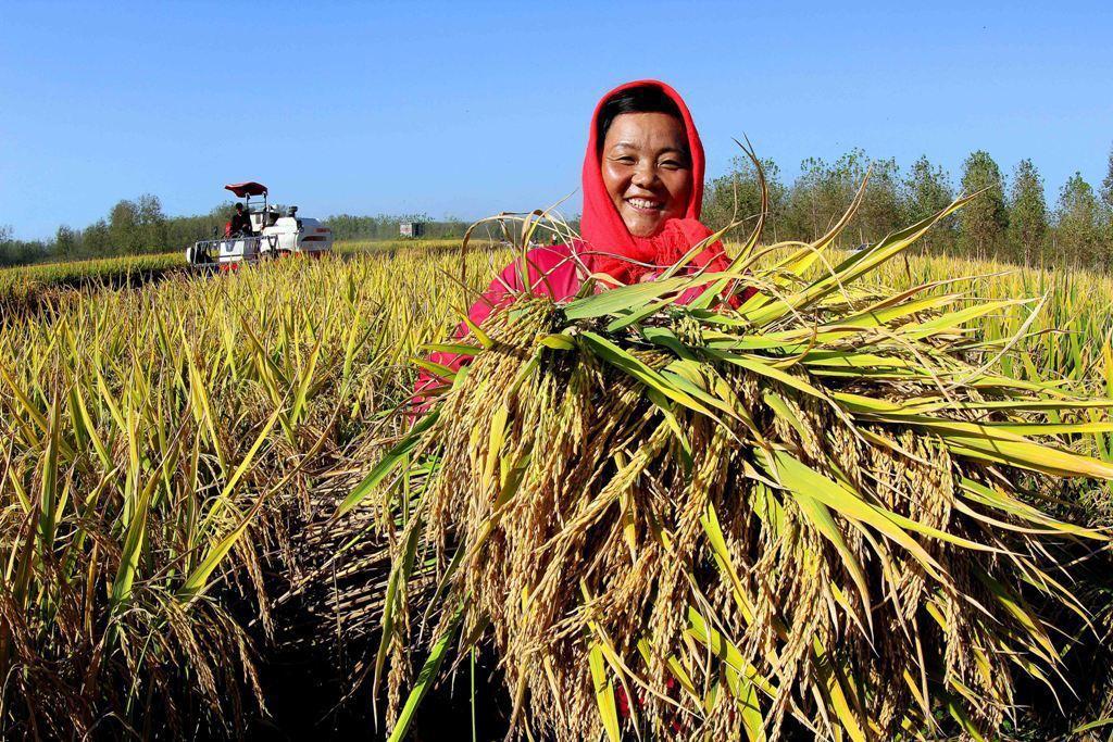 台灣第一個善循環平台「大米缸計畫」,推廣有機栽種的好米,不但減輕青農負擔,助土地...